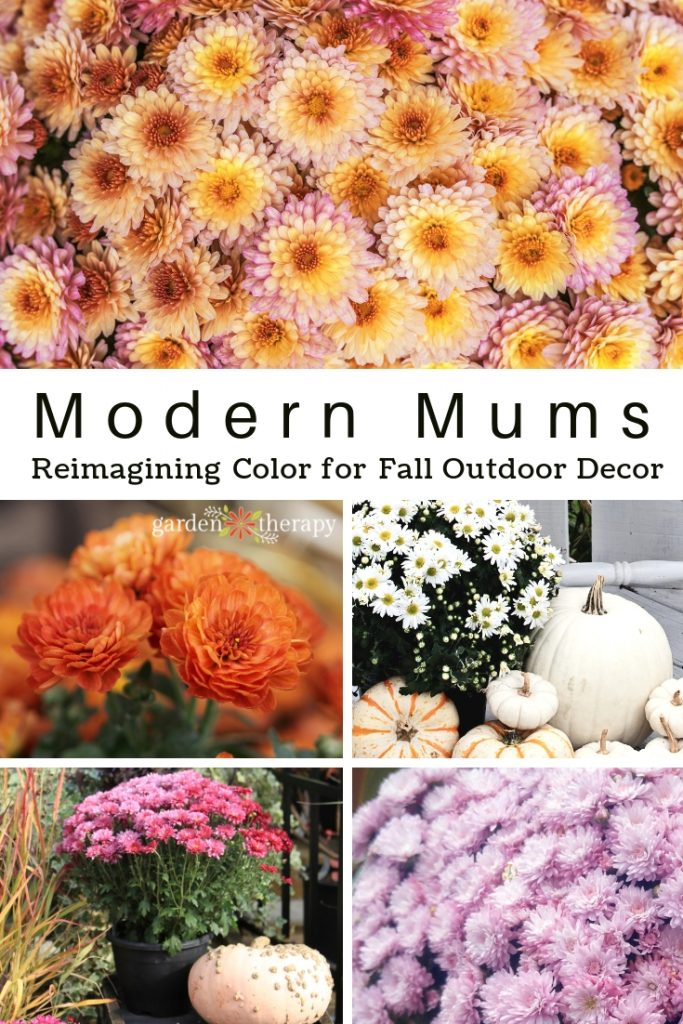 Modern Mums: Reimagining Color for Fall Outdoor Decor. These aren't your mom's mums! Hardy mums in modern colors make for stunning fall displays.