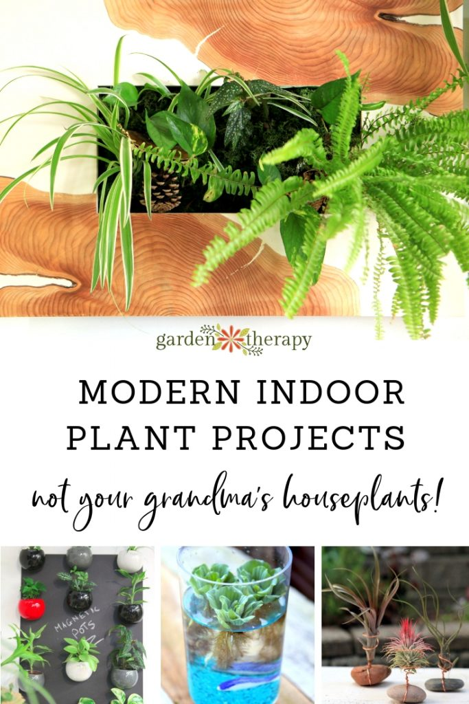 Modern Indoor Plant Projects: Not Your Grandma's Houseplants! Try these ideas for contemporary houseplant displays with a fresh look.