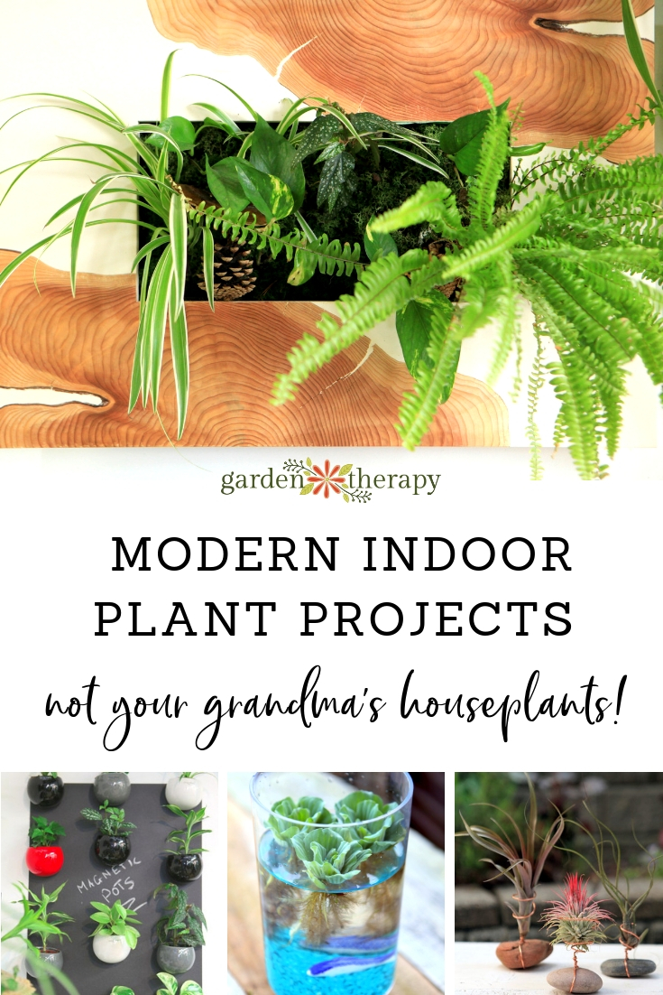 These Arent Your Grandmas Houseplants Indoor Plant Projects For