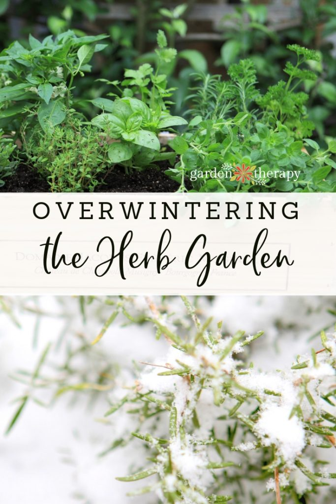 "Green herbs and herbs covered in snow with copy ""Overwintering the Herb Garden"""