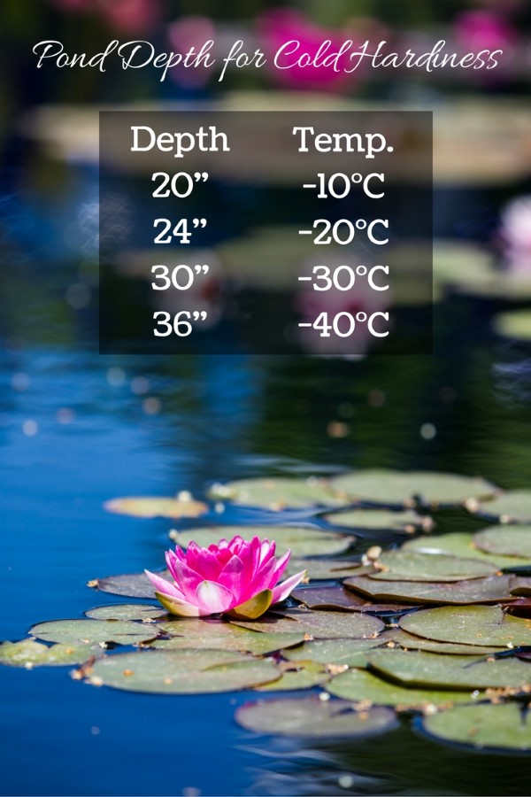 Want to know how deep your garden pond needs to be to overwinter without freezing? Find out here