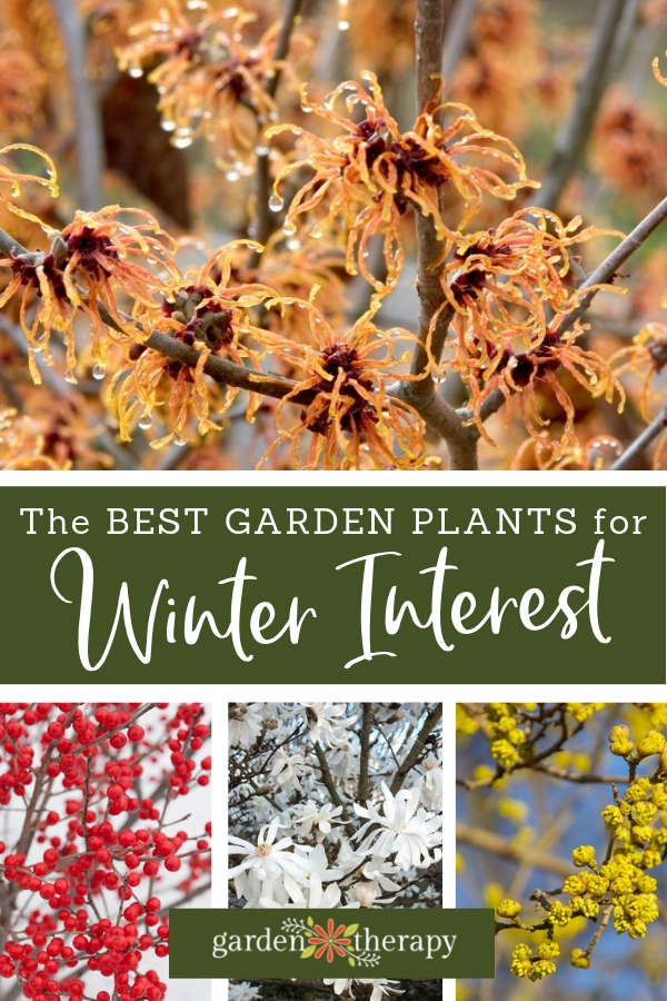 The Best Garden Plants for Winter Interest. Winter plants don't have to be boring.