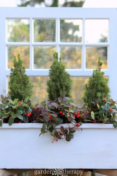 A Wonderful Winter Window Box Planter (That You Can Make Even If You Don't Have a Window Box!)
