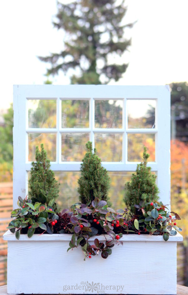How to make and plant a window box for winter