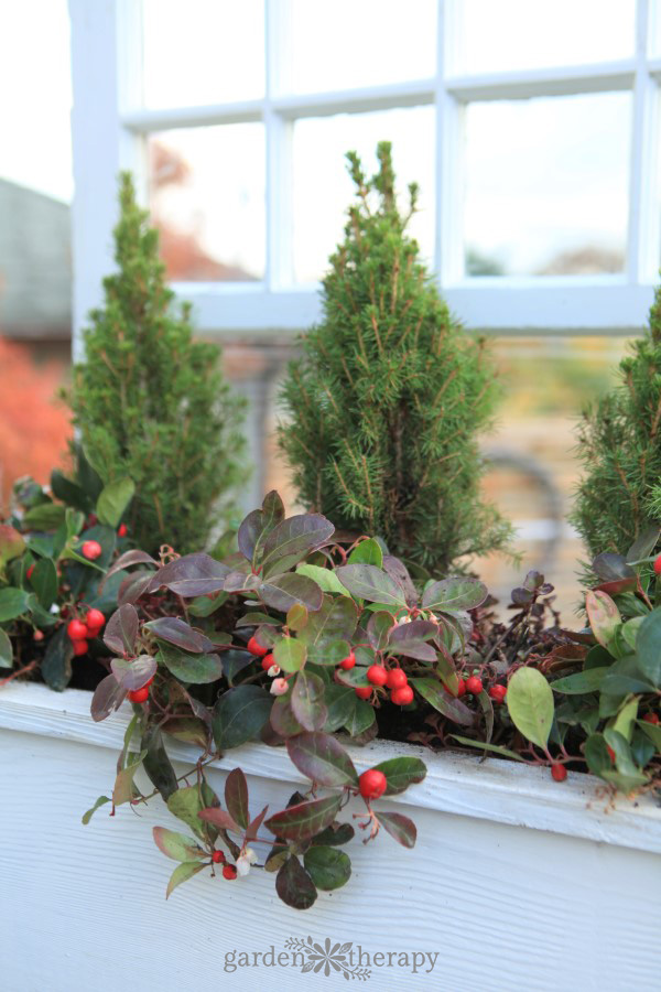 Make a simple window box planter for winter