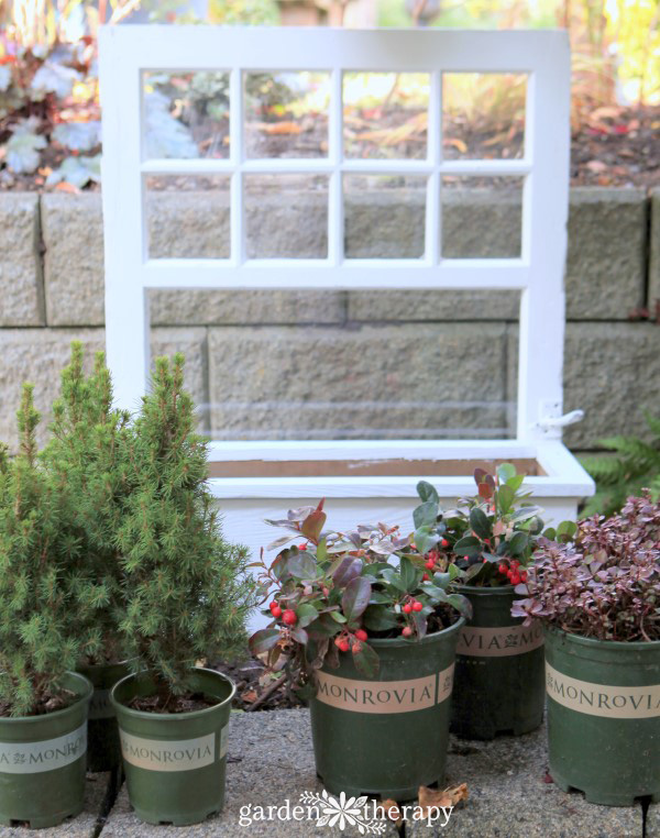 planting a winter window box