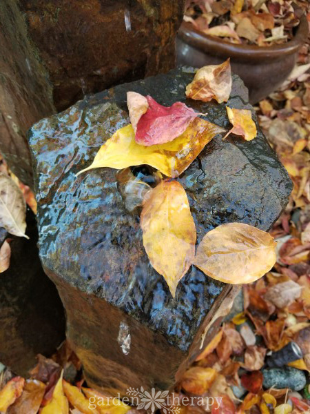 Remove fall leaves from a water feature
