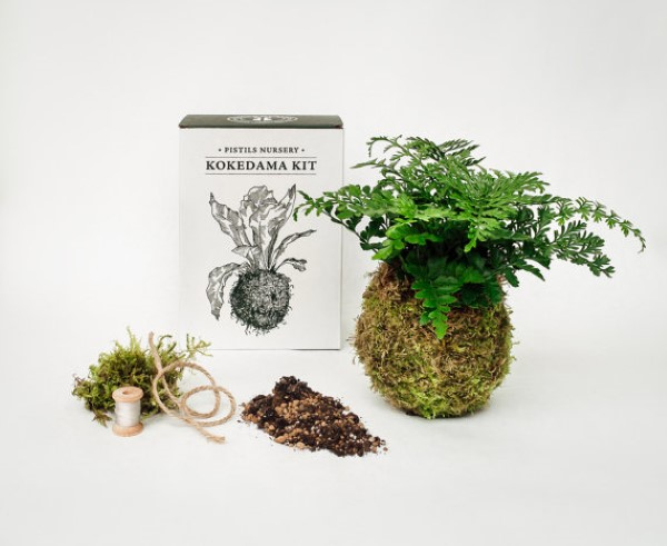 garden-inspired gifts: kokedama moss ball gardening kit