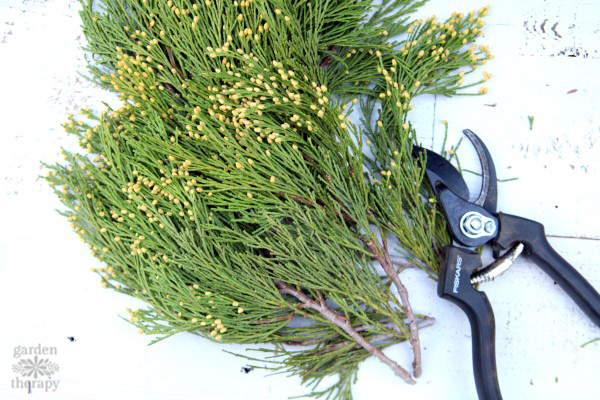 incense cedar for a fragrant wreath