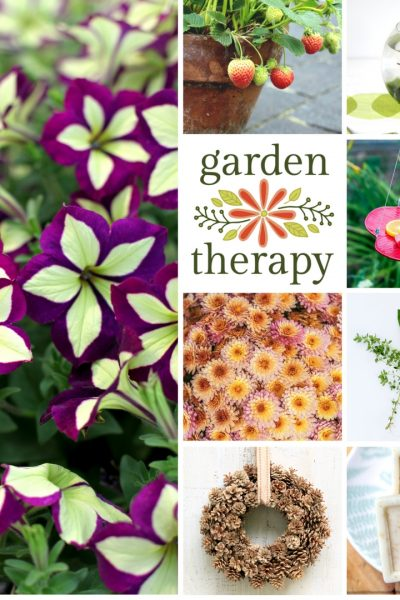 The Best of Garden Therapy 2017