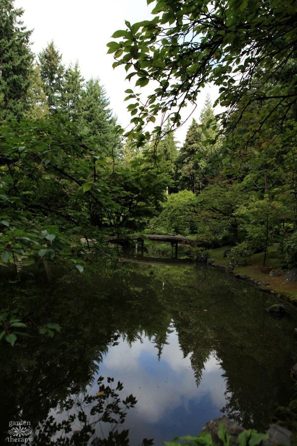 A Japanese garden pond