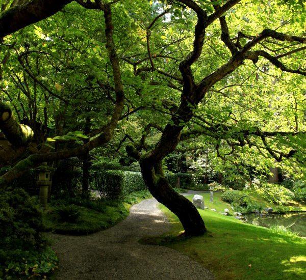 Nitobe Japanese garden at UBC