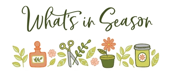 What's in Season on Garden Therapy