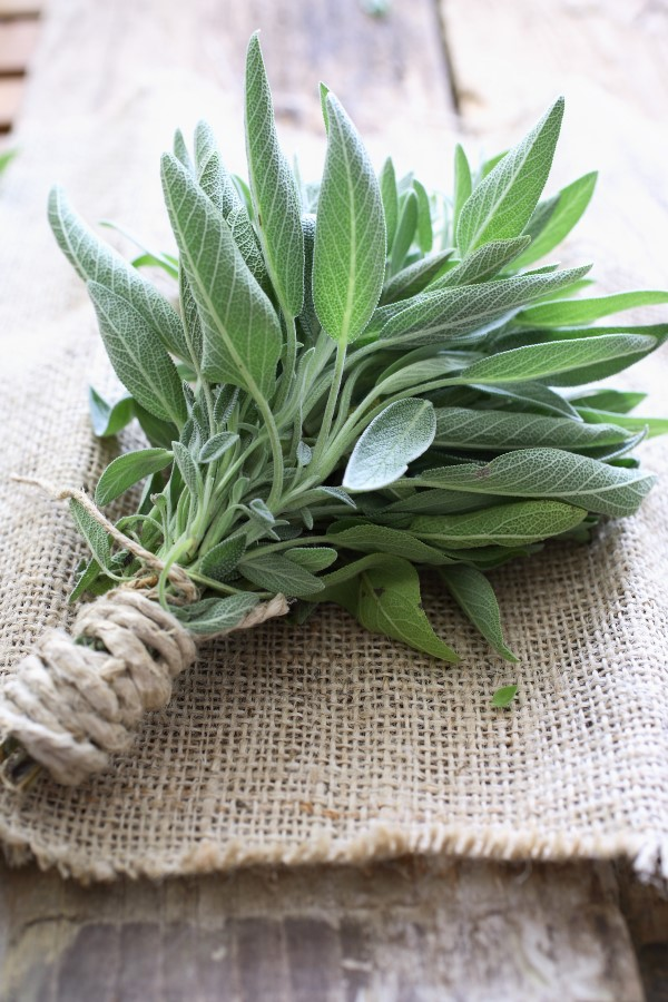 Bunch of Sage with Twine