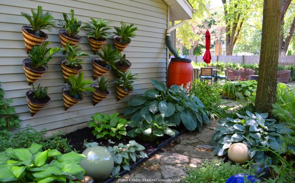 Create a wellness garden at home