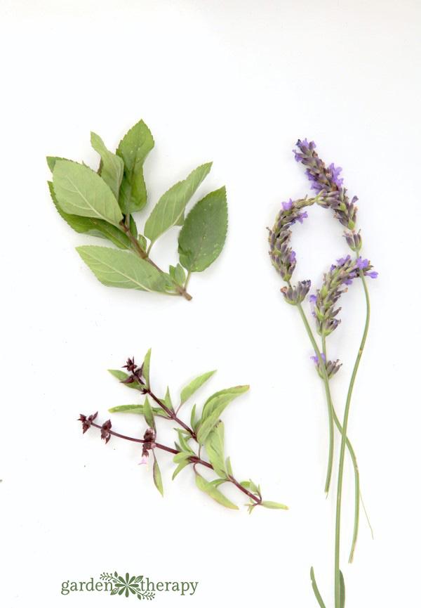 Fresh herbs for my herbal tea hand soap recipe
