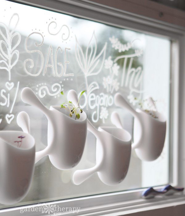 livi pots with chalk pen labels on the window
