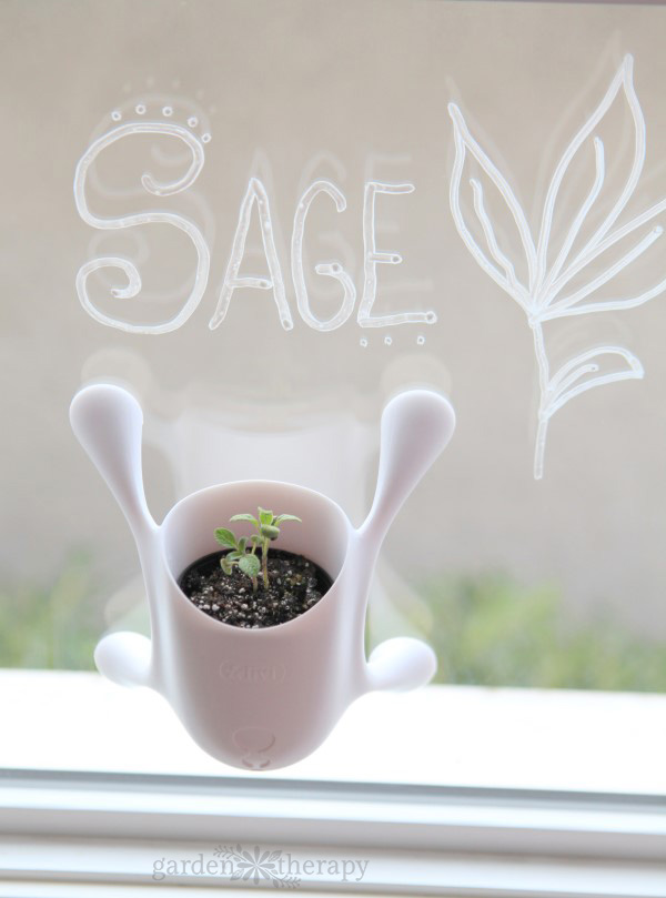 Say Goodbye To The Winter Blues With A Diy Window Herb
