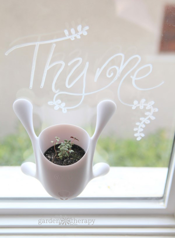 Garden Therapy indoor herb collection (Thyme)