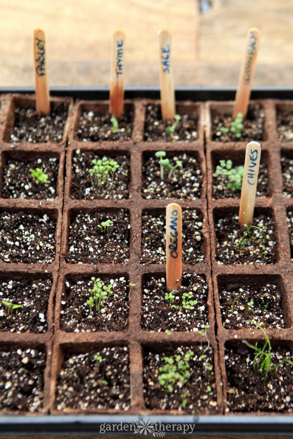 Give your seeds their best possible start with this free seed-starting tracker.