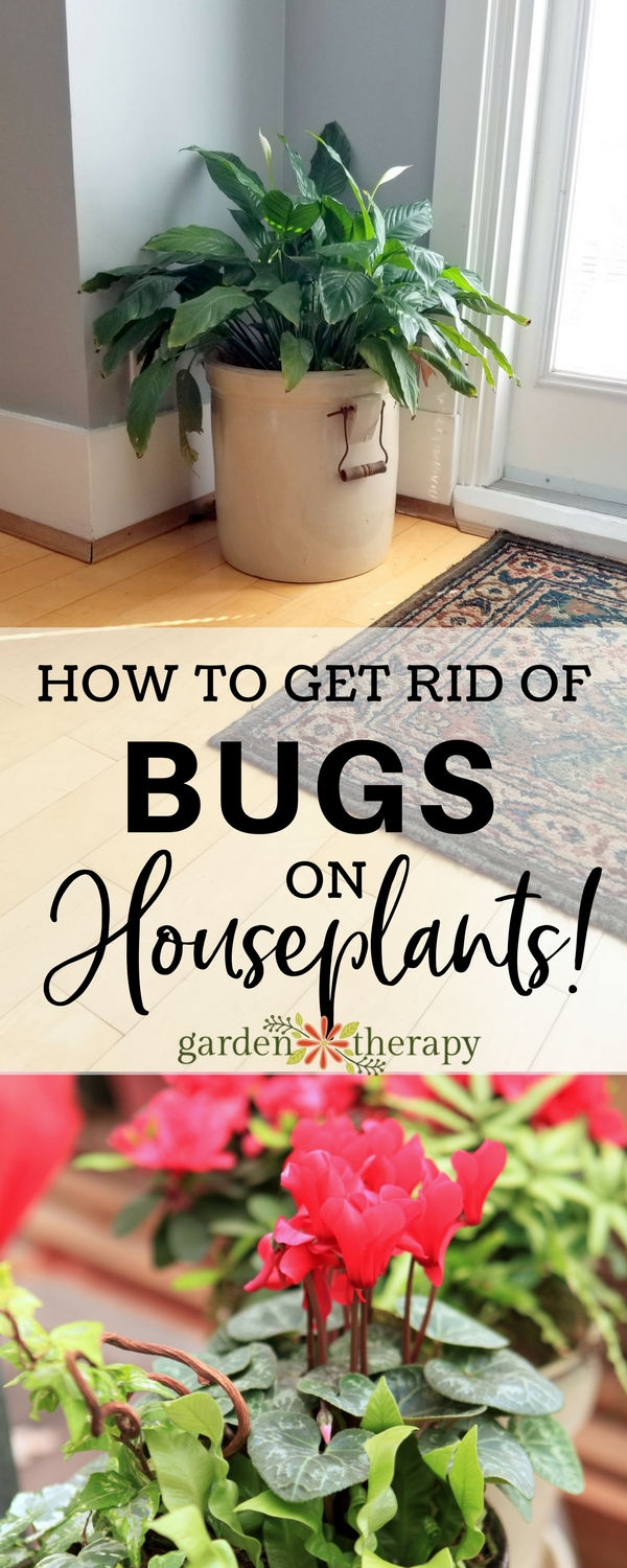 How to prevent identify and get rid of 8 common - How to get rid of bugs in garden ...