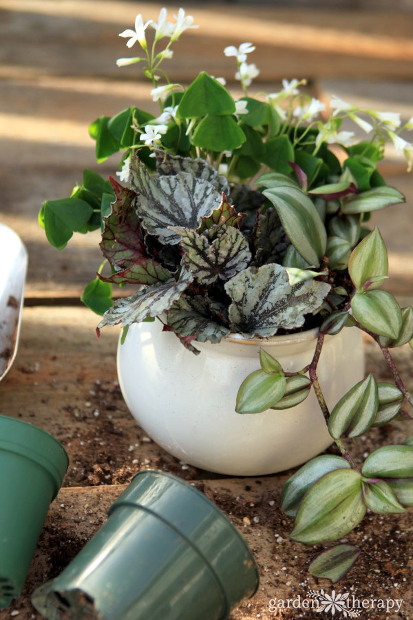 prevent and treat fungus gnats