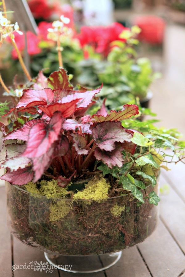 Keep colorful foliage like this happy and healthy by preventing pests naturally