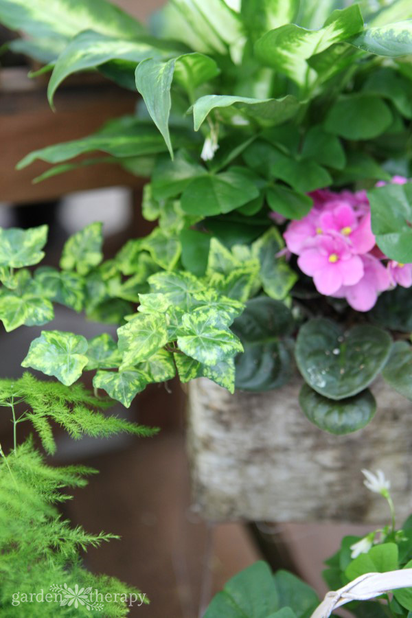 Keep houseplants healthy with these tips for getting rid of pests