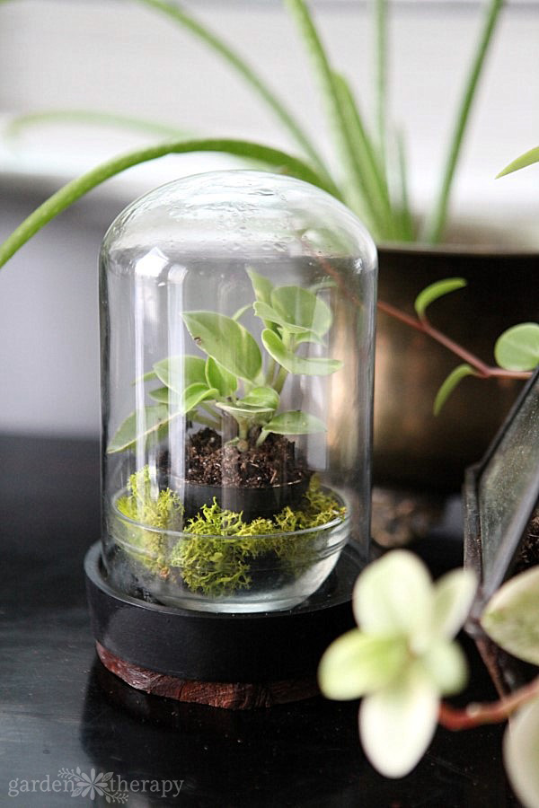 Essential Plants For Stunning Terrariums Garden Therapy