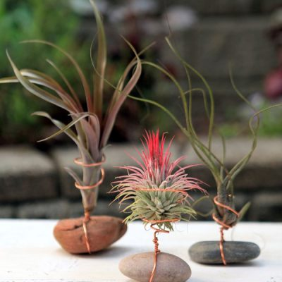 Crafting with Air Plants and Wire