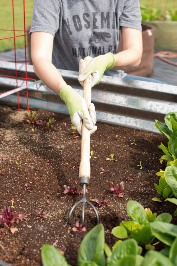 close-up image of gloved hands gripping a three-tined garden cultivator fork and working soil with it