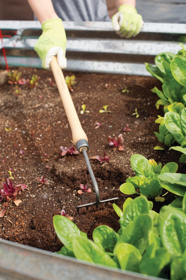 mini garden rake with long handle being used to rake soil