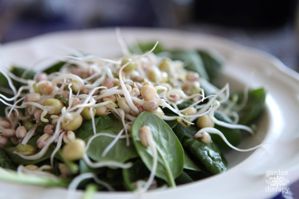 how to sprout green peas and mung beans to add to salads and more