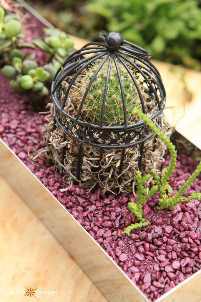 cactus in a cage on a tray of pink gravel to help prevent fungus gnats