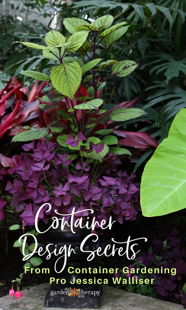A stunning multicolored container garden planted using expert Jessica Walliser's design secrets