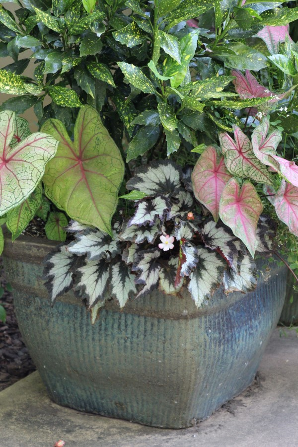 Large gray-blue square container planted with variegated foliage in shades of pink, green, yellow, and white