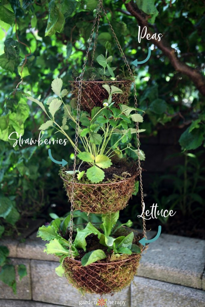 layered hanging basket with various edibles planted
