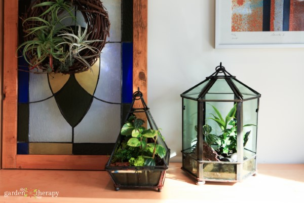 Two geometric terrariums in different shapes with tropical plants growing inside