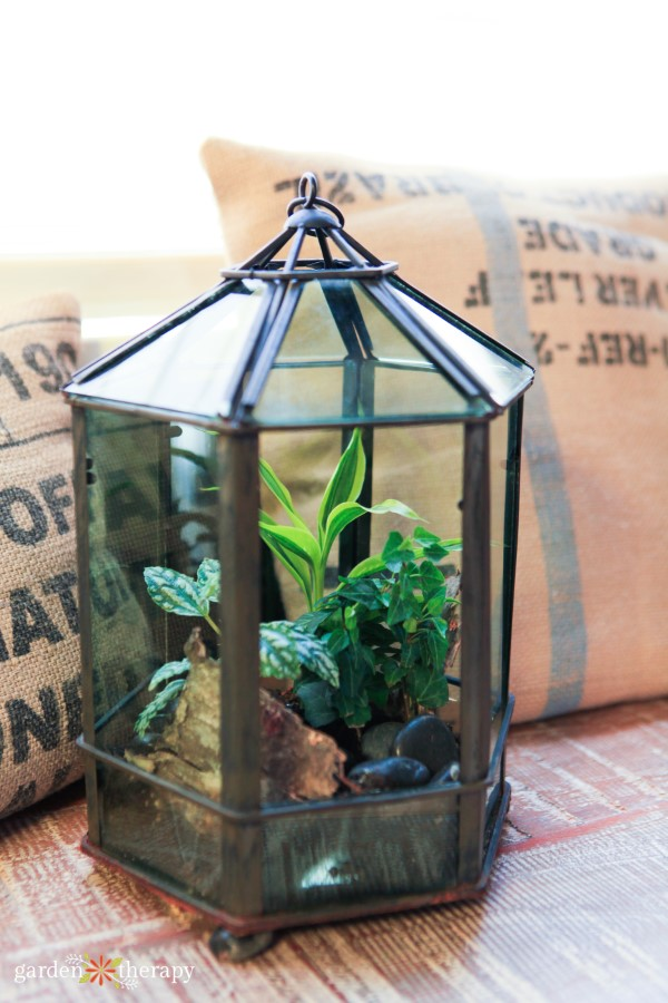 Glass terrariums planted with tropical houseplants
