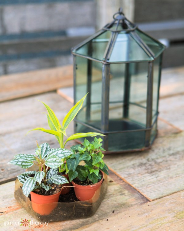 Assorted tropical plants in front of a glass terrarium