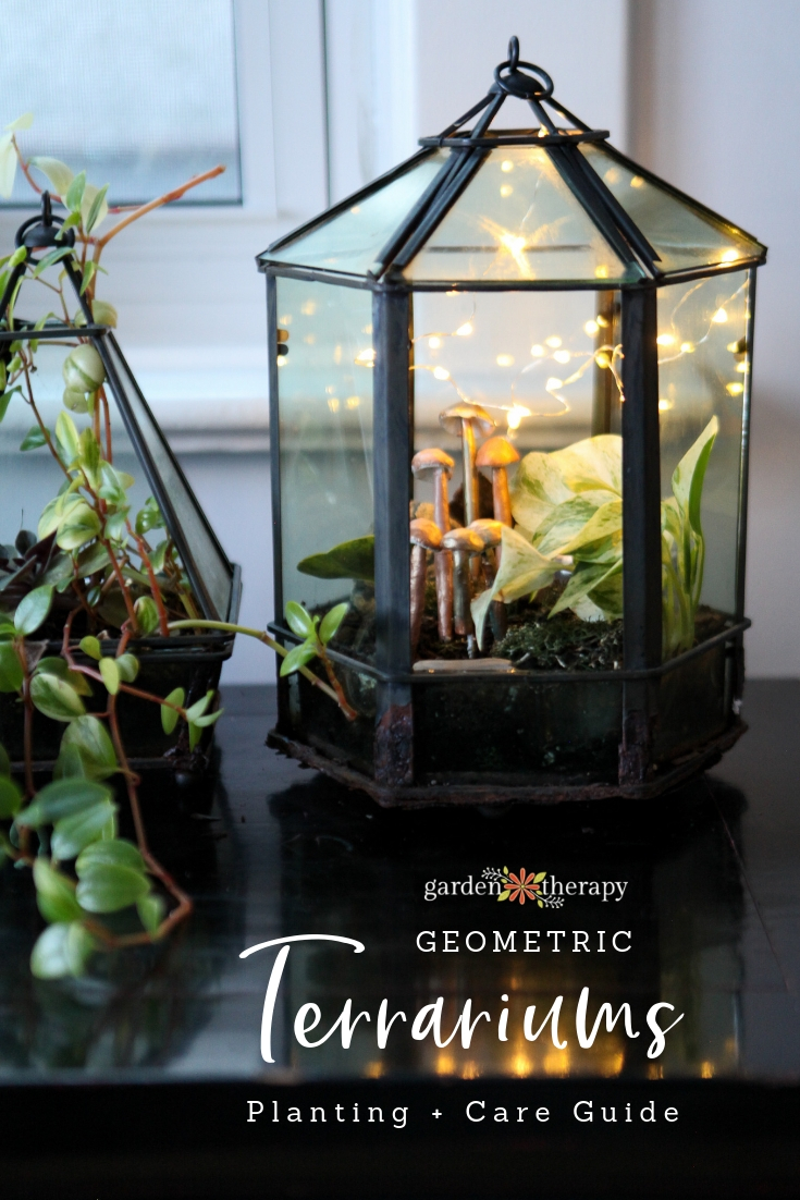 Geometric Terrarium Planting and Care Guide. Beautiful terrariums full of tropical plants.