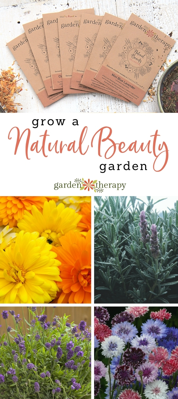 Grow a Natural Beauty Garden with lavender, calendula, cornflower, and more