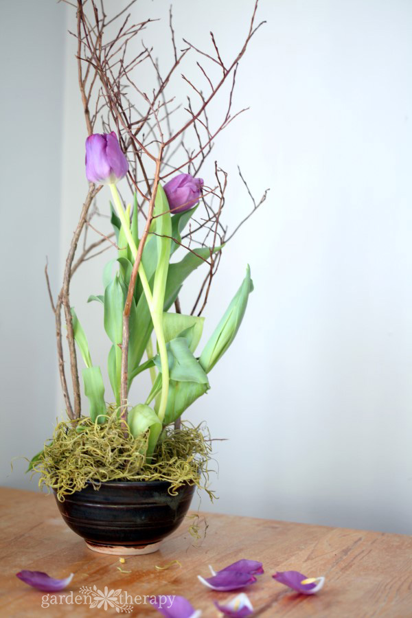 Purple tulips can be forced indoors in a bowl with decorative branches for support