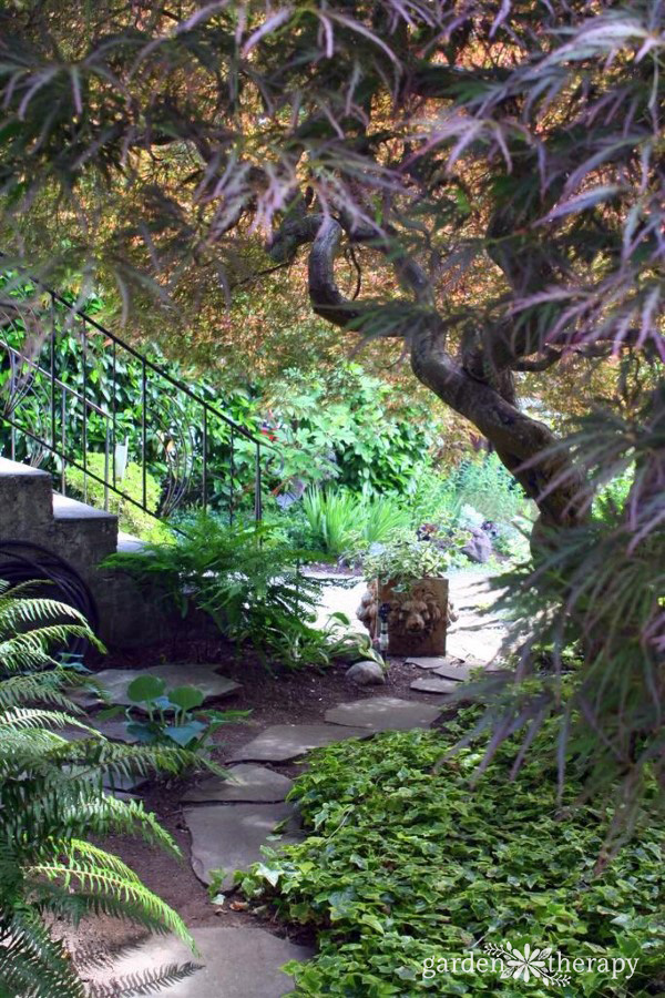 A stone garden path with stairs on one side and a large Japanese maple on the other side