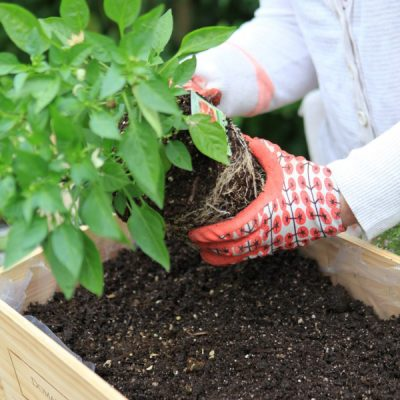 Give Your Plants their Best Start with these Soil Recipes