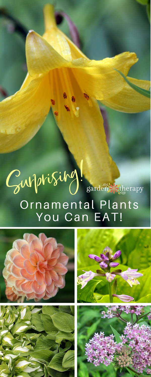 Daylilies and other surprising ornamental plants that you can eat