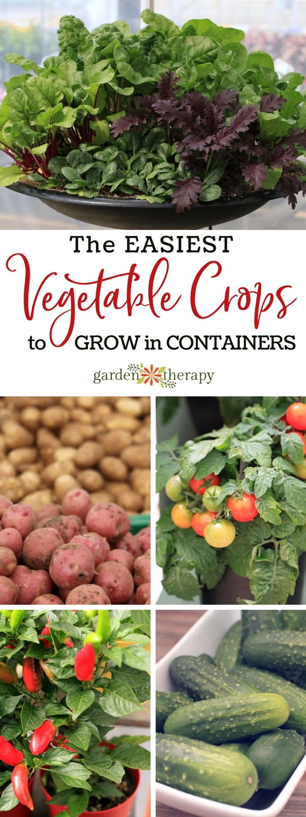 Vegetables that you can grow in containers, including lettuce, potatoes, tomatoes, peppers, and cucumbers