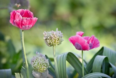 Vegetables Love Flowers: Improve Your Vegetable Yield by Planting Beautiful Blooms