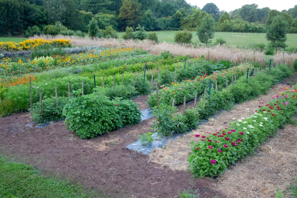 A vegetable garden interplanted with flowers is healthy and easy to care for