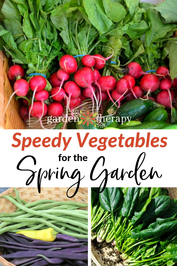 Speedy vegetable to grow in the spring garden
